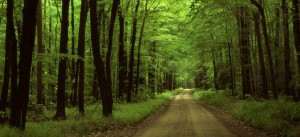 camino-del-bosque